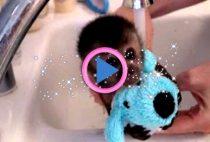 bagnetto scimmietta