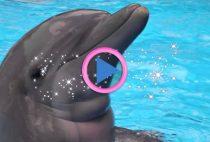 delfino terapia