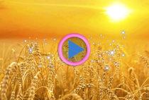 litha-solstizio-destate-festa-del-sole