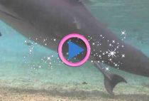 nascita delfino