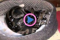 nascita gatto