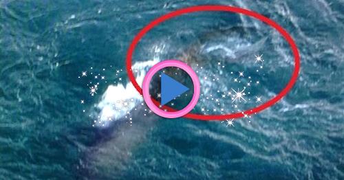 Sirena al largo delle coste della grecia foto e - Immagini della vera sirena ...