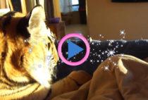 tigre sul letto