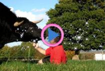 toro corrida